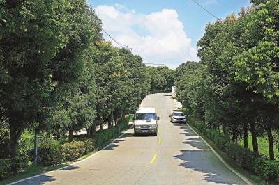 同时,这条路连上了通往云龟山风景区的龙长路,形成一条环形公路,有效